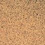 Organic Amaranth Seed - (Now Indian)